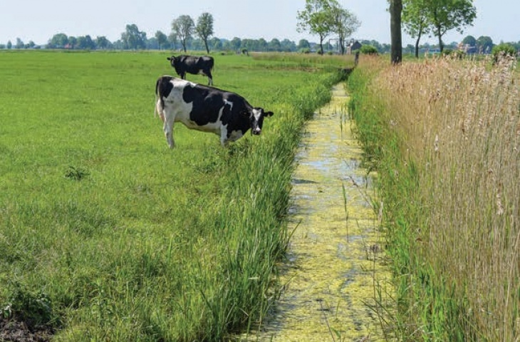 European agricultural policy needs to ensure stronger environmental improvements for water