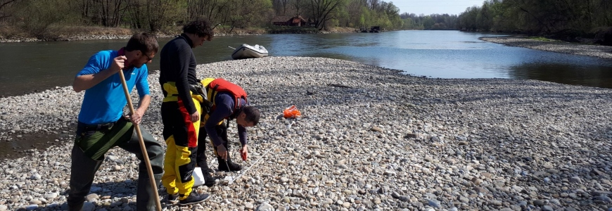 Gravel sample collection fieldwork on the river Mura